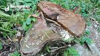 UBND tỉnh Nghệ An chỉ đạo làm rõ vụ khai thác rừng trái phép trong vùng biên giới