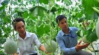 Bám trục nào trong sản xuất nông nghiệp để phát triển?