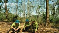 Nghệ An: 7 tháng bàn giao 43.000 ha rừng cho người dân quản lý