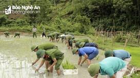 Các lực lượng giúp người dân vùng tâm dịch Tương Dương cấy lúa