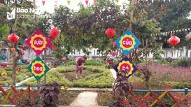 Phụ huynh vùng biên Nghệ An góp hoa tô điểm trường học