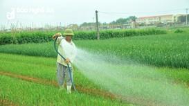 Hướng đi nào để hạn chế tình trạng nông sản phải 'giải cứu'?
