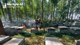 Người du mục theo đàn ong lấy mật miền trung du Nghệ An