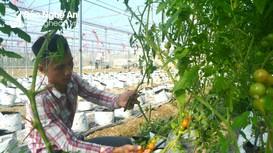 Nghệ An: Hỗ trợ nông dân ứng dụng công nghệ số vào sản xuất nông nghiệp