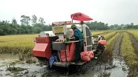 Gặt lúa, cắt cỏ giúp nông dân vùng phong tỏa ở Nghệ An