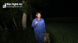Theo chân 'thợ săn lươn' trên ruộng bậc thang ở vùng cao Nghệ An