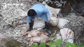 Người dân vứt lợn chết đầu nguồn sông Lam