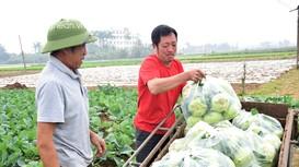 Mỗi sào rau vụ đông, nông dân Nghệ An 'đút túi' hàng chục triệu đồng