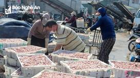 Hải sản Nghệ An giảm giá vẫn khó tiêu thụ, do ảnh hưởng dịch Covid-19