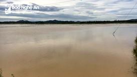 Nghệ An: Hàng trăm ha lúa hè thu ngập nước do mưa lớn kéo dài