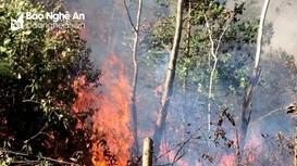 Nghệ An: 6 tháng xảy ra 11 vụ cháy rừng