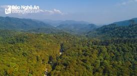Nghệ An đẩy mạnh phát triển rừng nguyên liệu