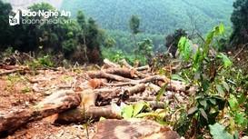 Nghệ An: Người đàn ông phá rừng tự nhiên bị xử phạt gần 38 triệu đồng