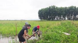Sau mưa lớn, người dân huyện lúa ở Nghệ An ra đồng săn chuột làm 'đặc sản'