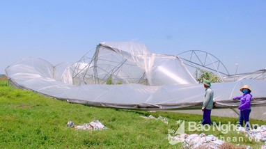 TP. Vinh: Nhà lưới đổ ập; Hàng trăm ha lúa 'nằm bẹp' sau mưa lốc