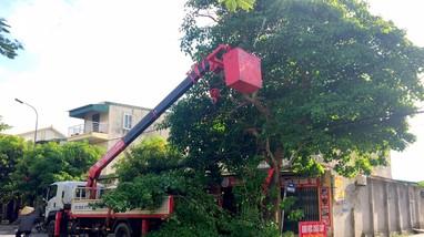 TP. Vinh cắt tỉa trên 3.500 cây xanh trước mùa mưa bão