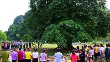 Người Thái Nghệ An tổ chức nghi lễ 'lạ' dưới gốc cây cổ thụ