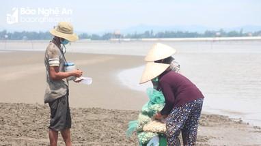 Nghệ An: Nông dân gặp khó vì ngao nuôi giảm giá, tiêu thụ chậm