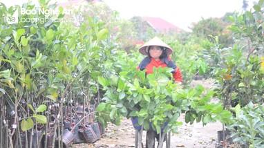 Nghệ An: Sau mùa hoa Tết, giống cây ăn quả về ngập các nhà vườn