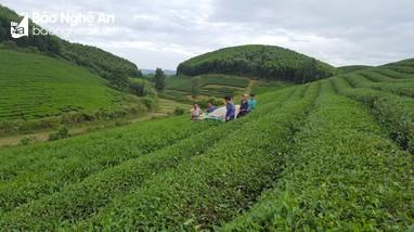 Khen thưởng nhiều tập thể, cá nhân điển hình 'làm theo Bác' ở huyện Anh Sơn