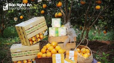 Xúc tiến thương mại, tìm kiếm thị trường cho nông sản Nghệ An