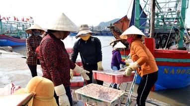 Tàu cá Quỳnh Lập phải bán hải sản ở cảng khác do dịch Covid-19