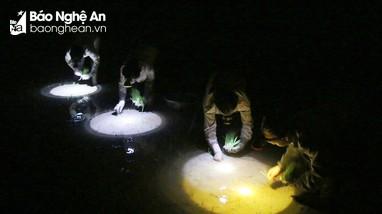 Nông dân vùng cao Nghệ An cấy đêm tránh nắng