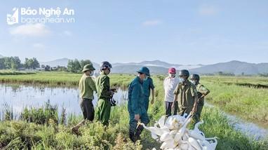 Nghệ An vào cuộc quyết liệt bảo vệ các đàn chim di trú