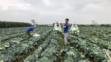 LĐLĐ huyện Diễn Châu kêu gọi giải cứu nông sản cho nông dân