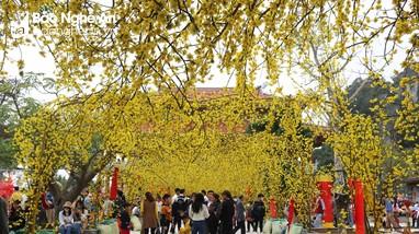 Rực rỡ cảnh sắc nhà chùa ngày Xuân