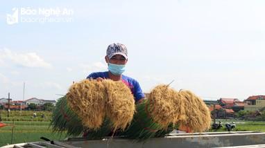 Vựa rau màu Quỳnh Lưu gặp khó trong khâu tiêu thụ
