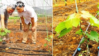 Cây mới 'bén' đất Thái Hòa