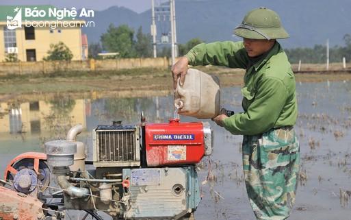 Nông dân Nghệ An tranh thủ xuống đồng khi nắng ấm