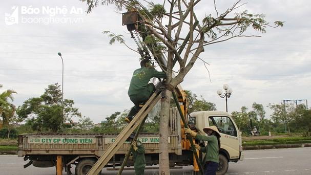 Công nhân chăm sóc cây xanh