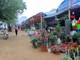 """Thành phố Vinh: """"Sốt"""" dịch vụ cho thuê đất bán hoa, cây cảnh Tết"""