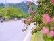 Thành phố Vinh ngập tràn sắc hoa trong nắng nóng