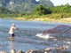"""Mùa """"săn"""" cá mát ở sông Giăng"""