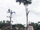 Chặt cây bên đường điện 35kV, người đàn ông bị điện giật tử vong