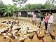 Ngân hàng CSXH huyện Yên Thành đồng hành xây dựng nông thôn mới