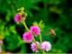 Ngỡ ngàng vẻ đẹp hoa dại quanh ta