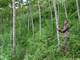 UBND tỉnh thông qua dự thảo đề án giao đất, giao rừng