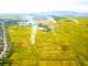 Mùa vàng trên những cánh đồng