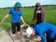 Thanh niên, học sinh chung tay diệt ốc bươu vàng hại lúa