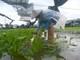 Nghệ An: Mưa lớn kéo dài, vùng màu nhiều nơi ngập úng, rau xanh tăng giá