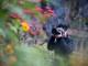 Quyến rũ cung đường hoa biên cương Nghệ An