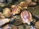 Thả nhiều cá thể trăn, rắn và rùa về rừng ở Nghệ An
