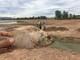 Nghệ An: Hạn hán khốc liệt, cá chết khô như sấy, nông dân cắt lúa cho trâu ăn