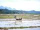 Nông dân miền núi Nghệ An tranh thủ nắng ấm cấy vụ xuân