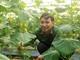 Nông dân Nghệ An trồng thành công dưa chuột Israel theo công nghệ nhà màng