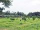 Chuyện làm giàu của tỷ phú nông dân vùng đất đồi Thanh Chương